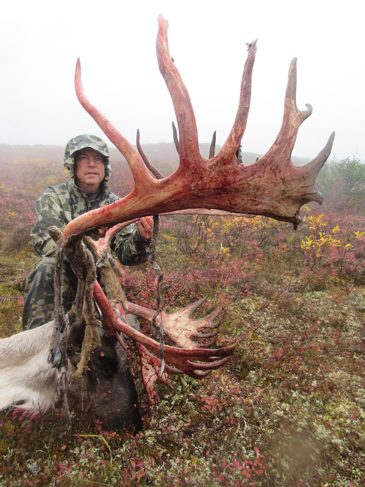 Alaska self guided caribou hunts 40 mile yukon charley tok kids can learn outdoor and hunting skills while providing their family with a freezer full of organic meat for the winter solutioingenieria Gallery