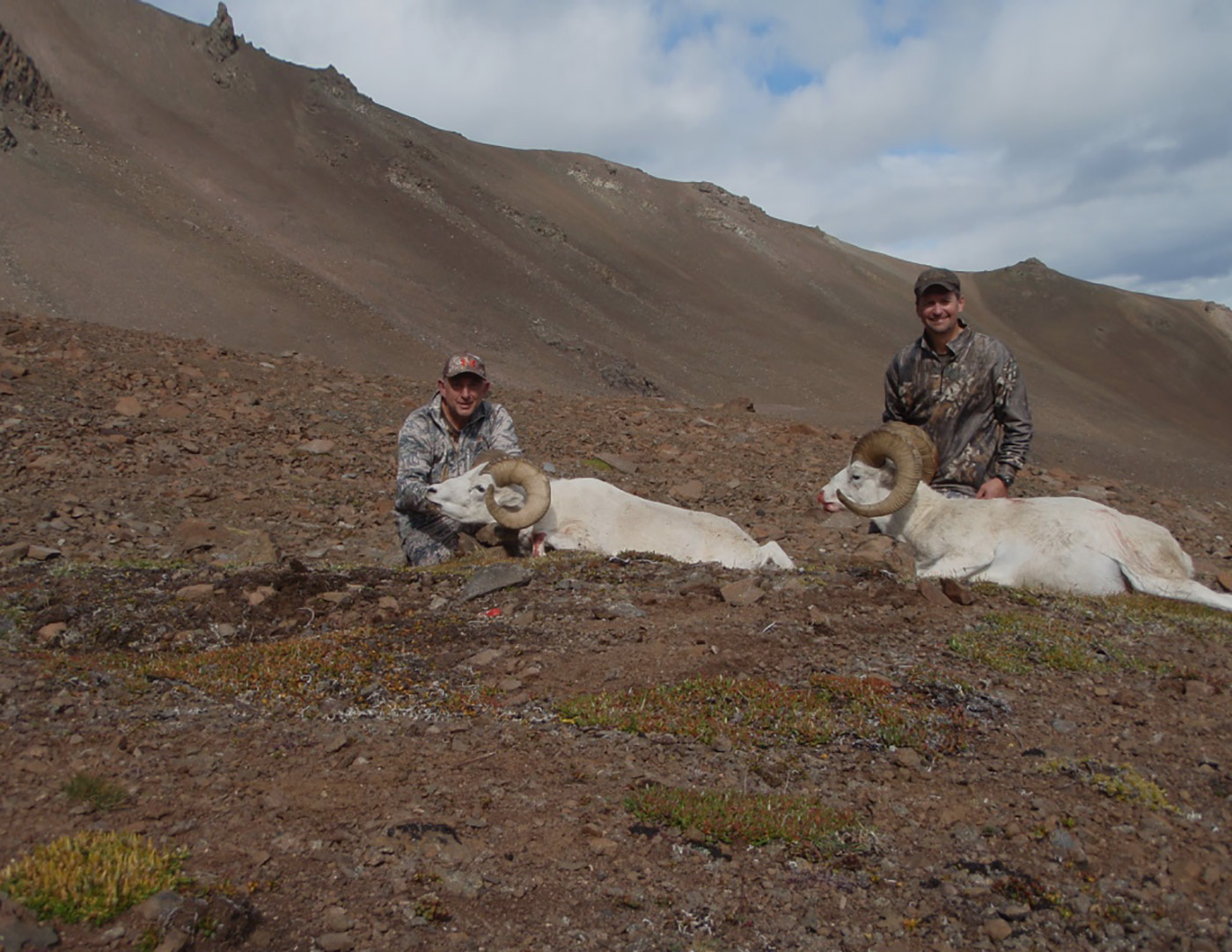 Self-guided Alaska sheep hunts